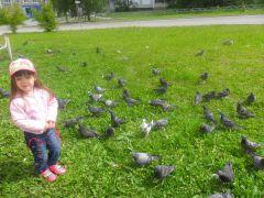 Птицы меня не боятся...