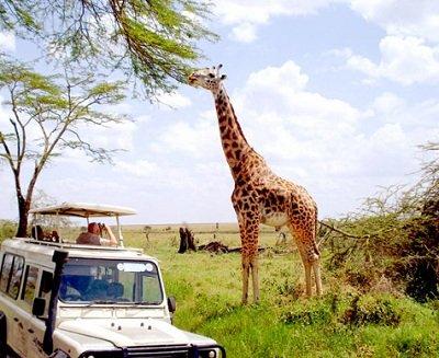 Прикрепленное изображение: жираф.jpg