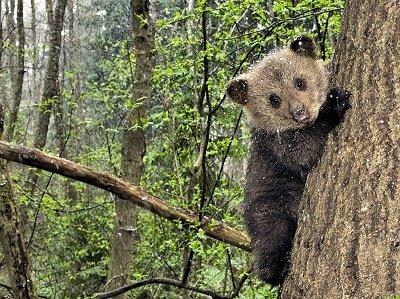 Прикрепленное изображение: мечты медведя.jpg