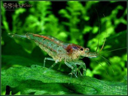 Прикрепленное изображение: animals-fish-fish-8091773.800.jpg