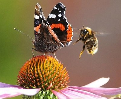 Прикрепленное изображение: полёт шмеля и бабочки.jpg
