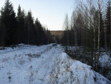 Прикрепленное изображение: лес 3.jpg