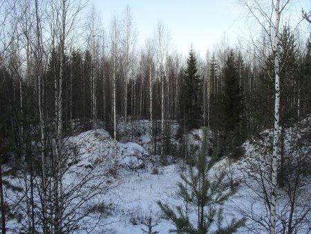 Прикрепленное изображение: лес 2.jpg