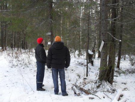 Прикрепленное изображение: зимний лес.jpg