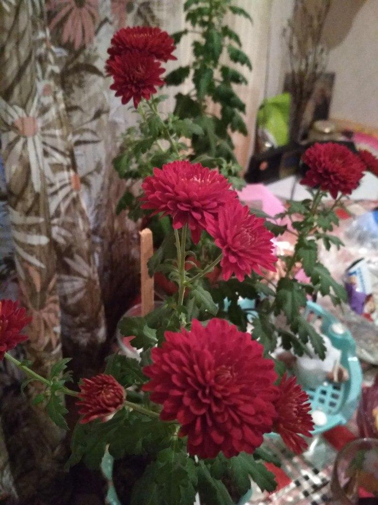 Цветы на свободе 40 березники