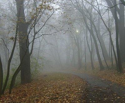 Прикрепленное изображение: осенняя тишина.jpg