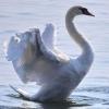 *Белая Птица*